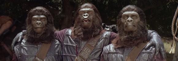 stellissimo-scimmia